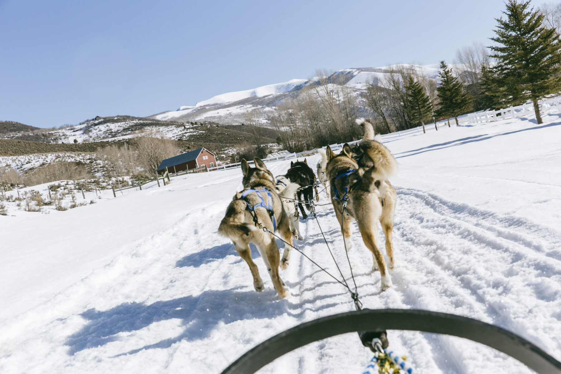 marriott-dog-sledding-utah-2016-0373