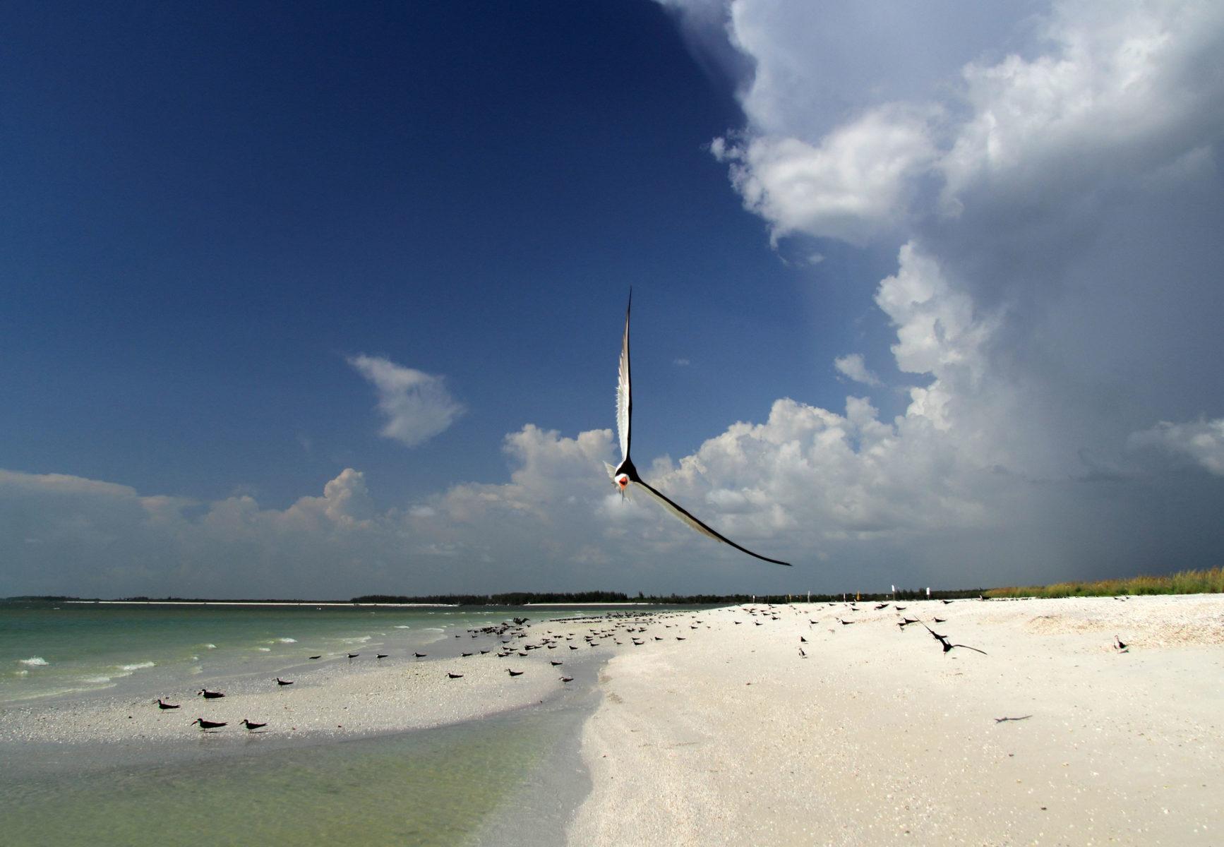 Sea Turtles Marco Island