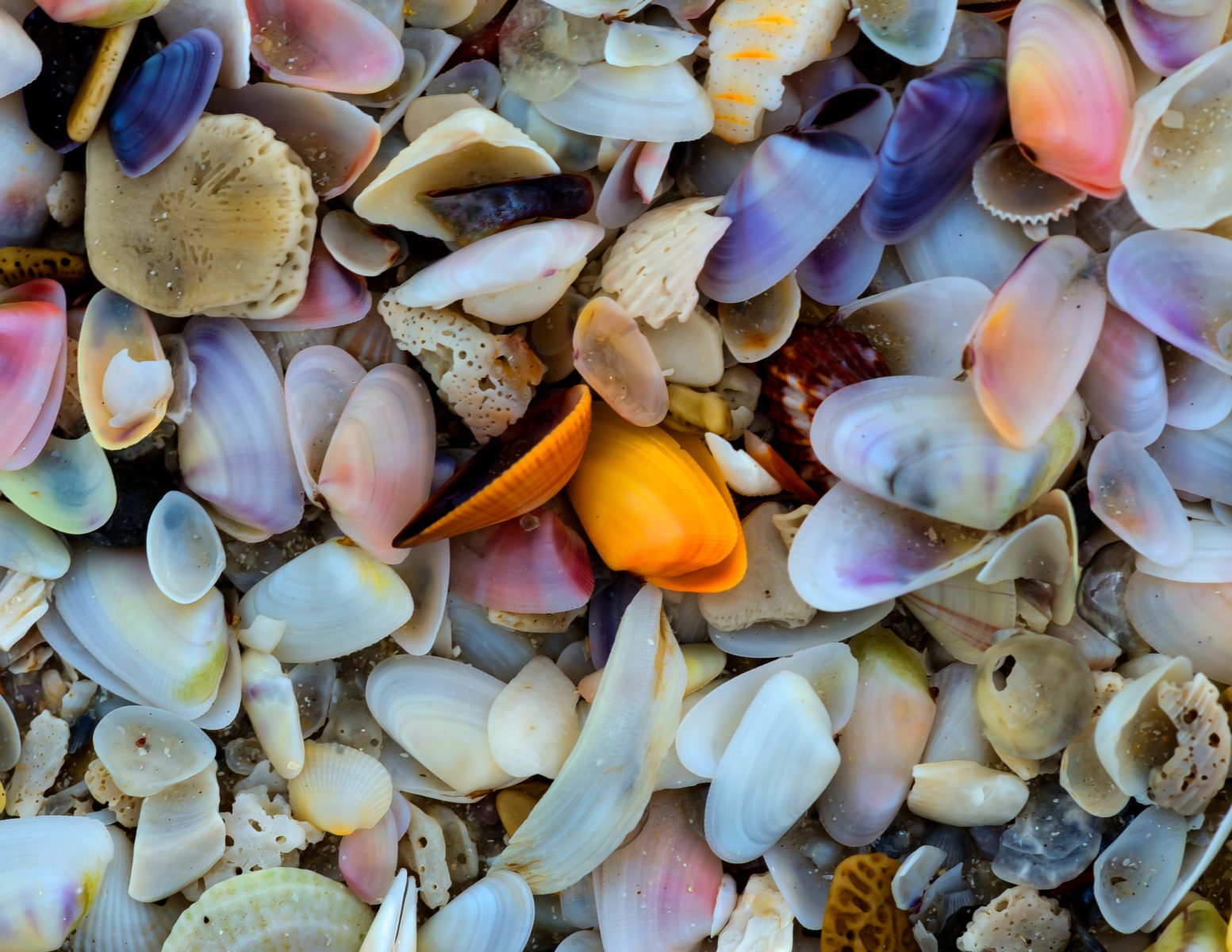 Marco Island Shelling — How, Where and When