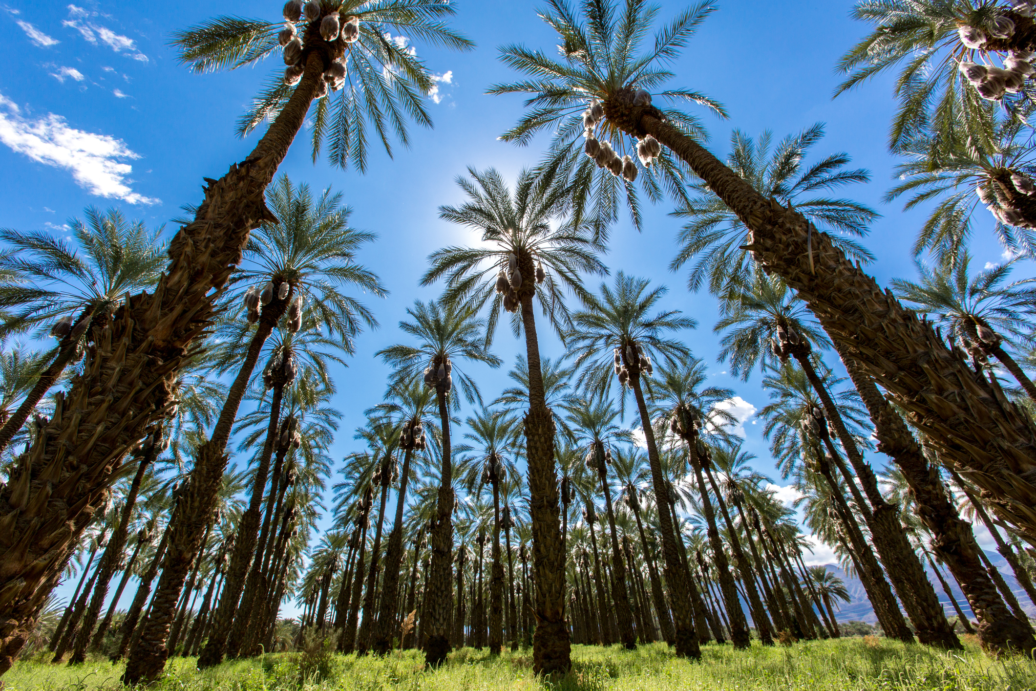 What to Do in Palm Desert | Marriott Vacation Club