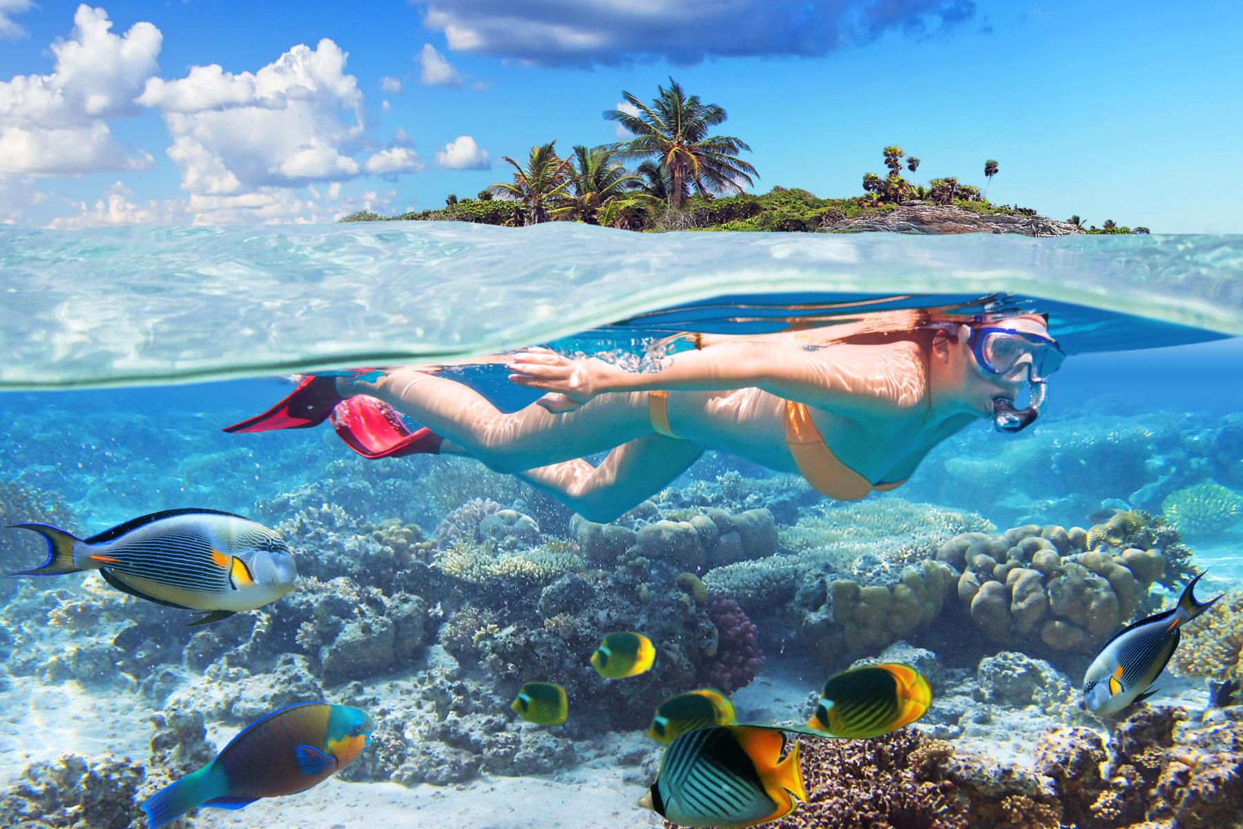 Snorkeling in tropical waters