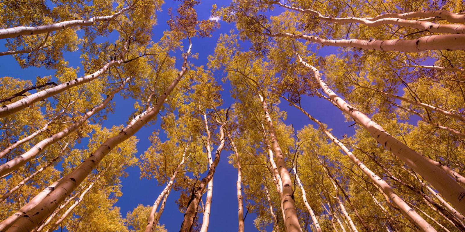 Breckenridge autumn