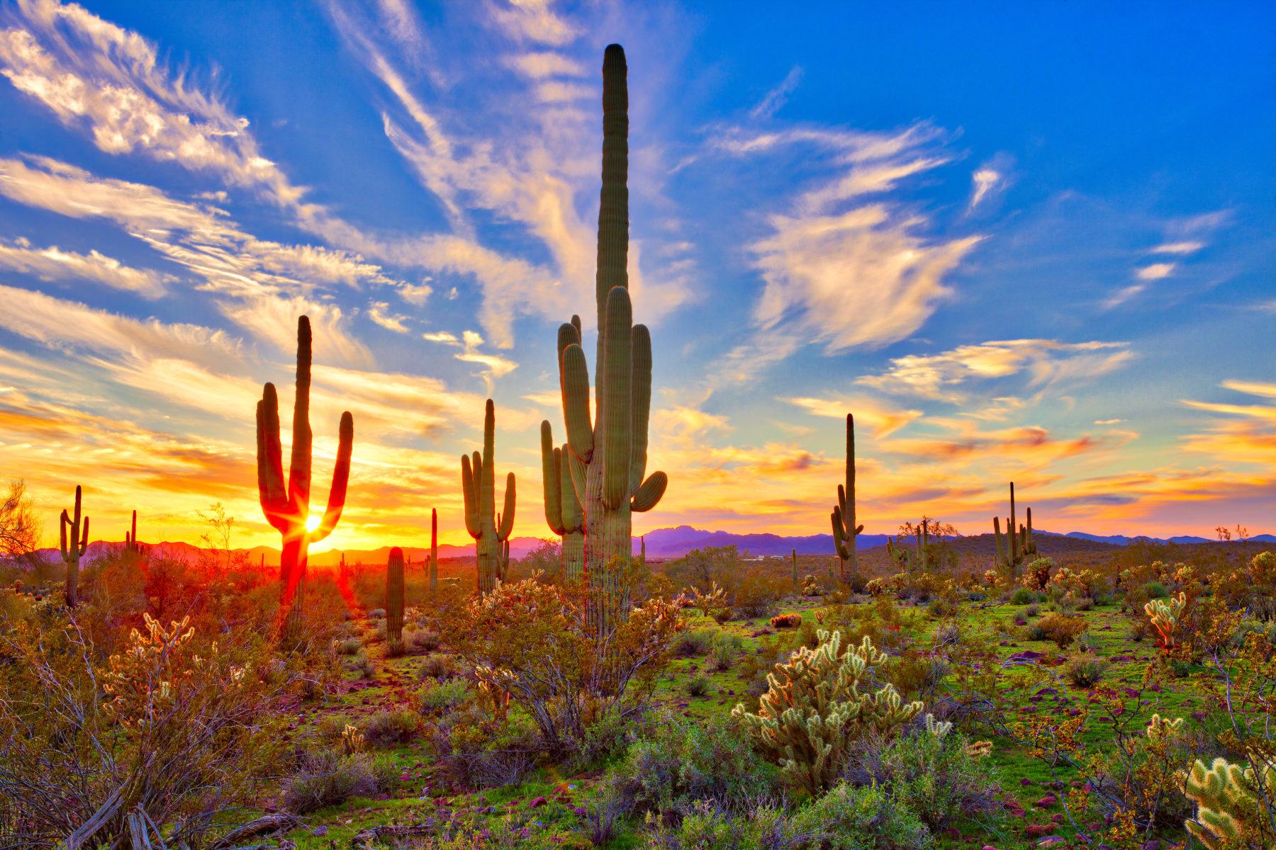 Exploring Phoenix Nature