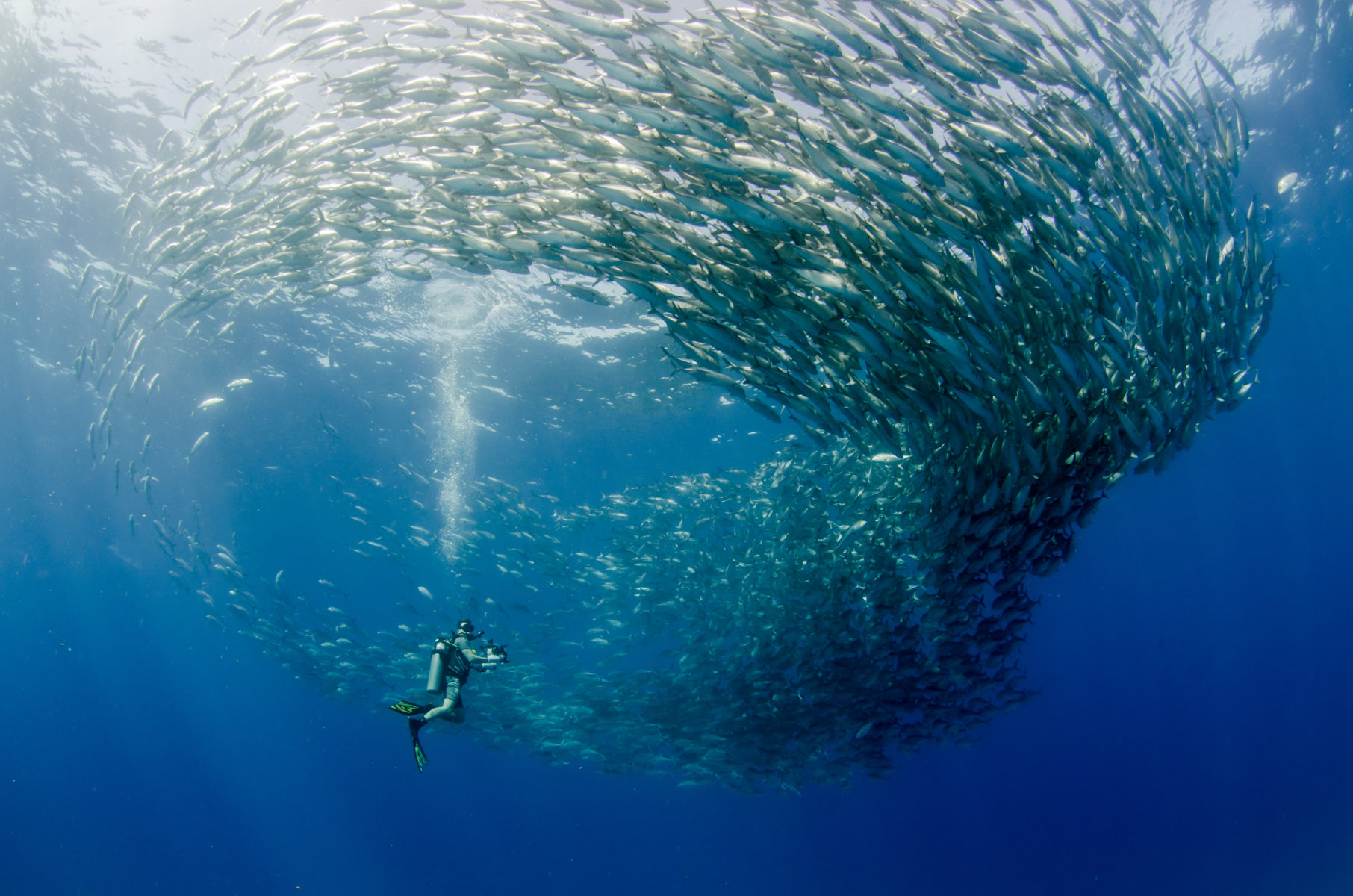 Los Cabos diver surrounded by a beautiful school of fish
