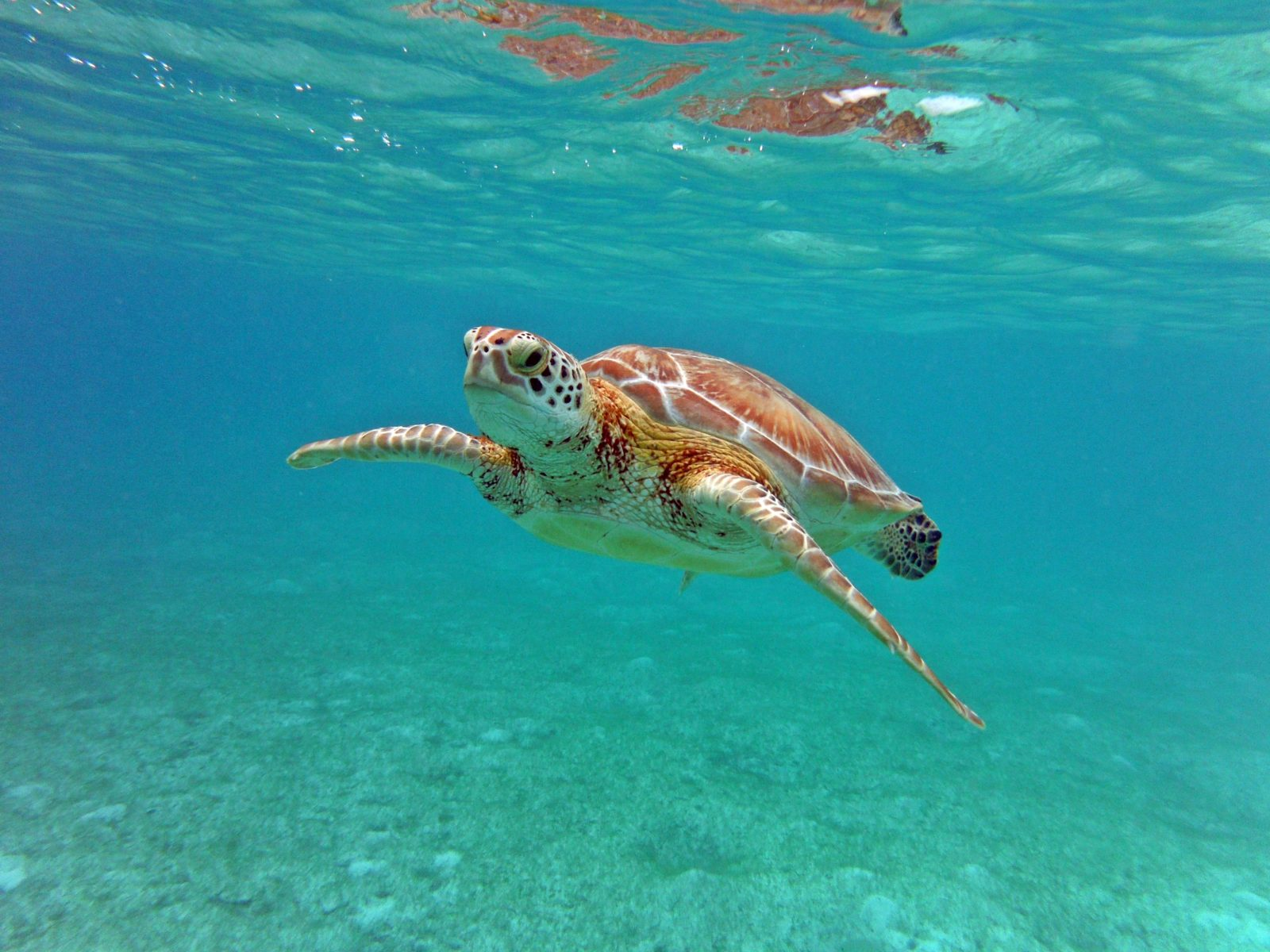 Encountering a friendly sea turtle in Cancún