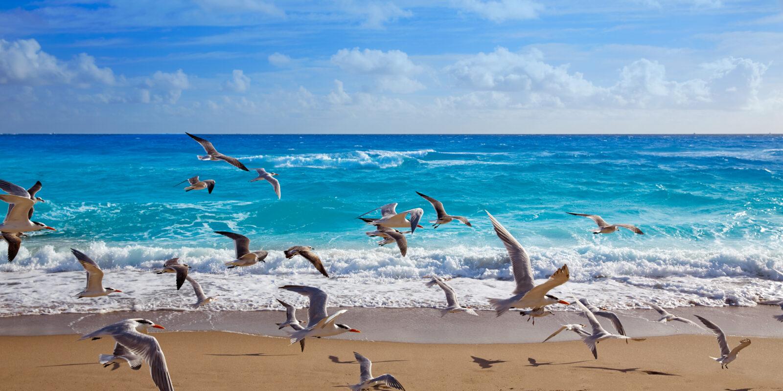Seagulls fly across the beach at Singer Island
